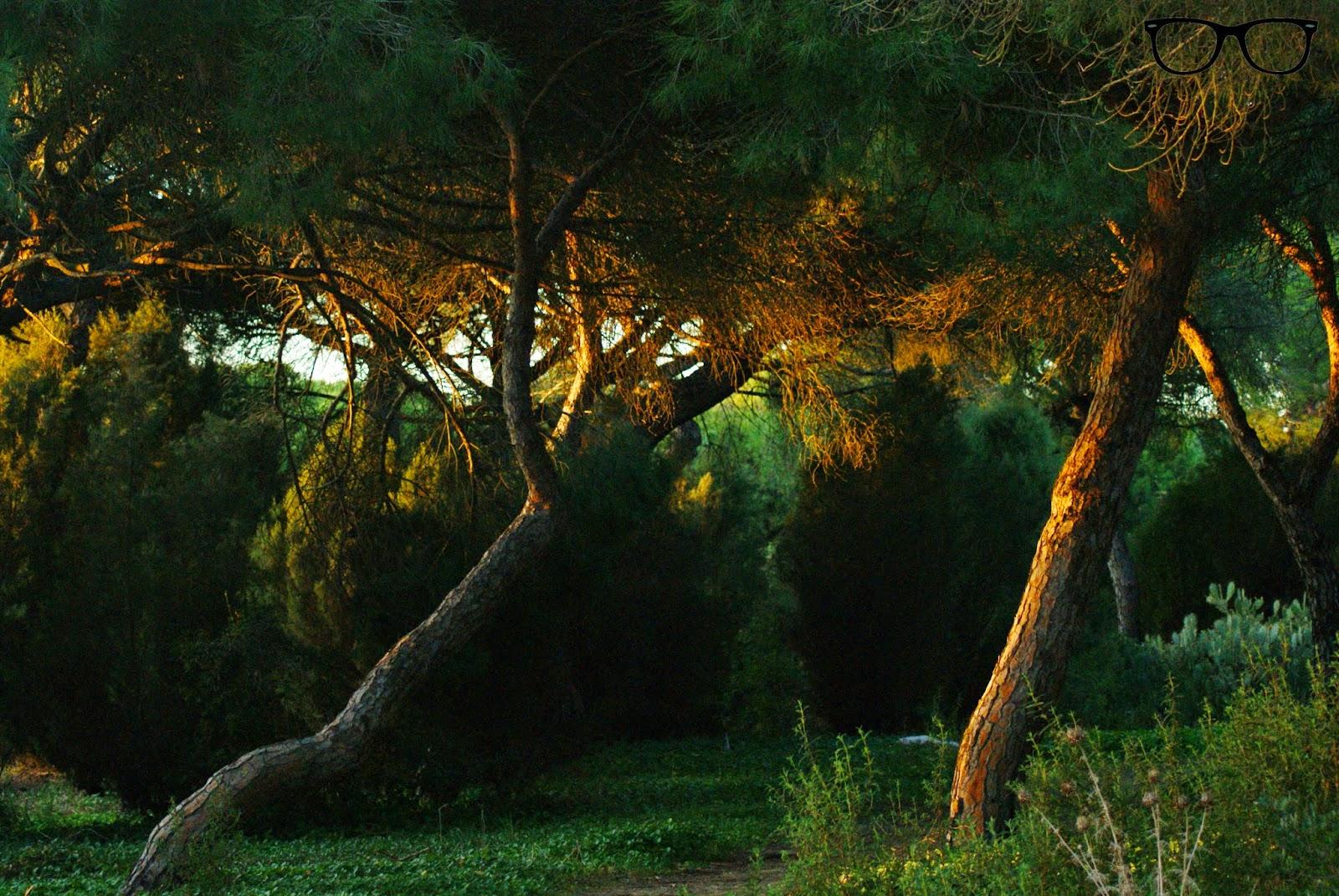 Bosque El Portil