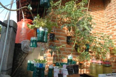 Manfaatkan Barang Bekas Sebagai Media Tanam Sayuran Sehat dan Segar
