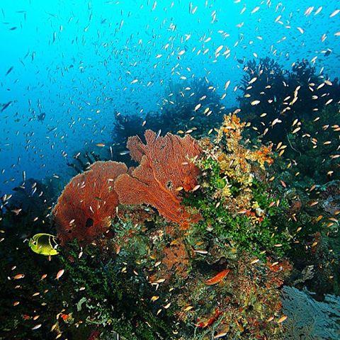 foto pemandangan bawah laut pulau weh aceh