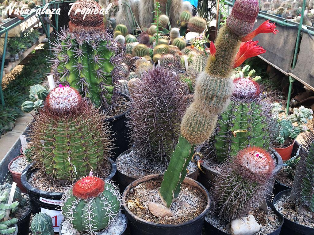 Naturaleza tropical como crear y mantener una colecci n for Fotos de cactus