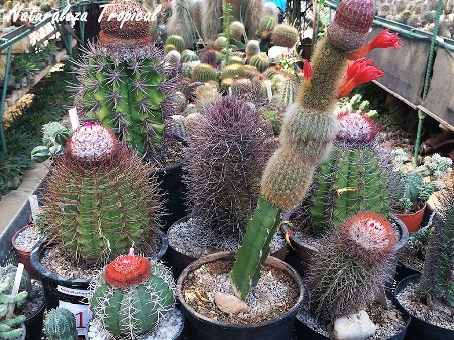 Colección de cactus variados