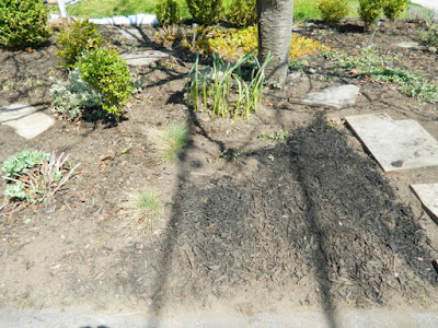 Toronto Birch Cliff spring garden cleanup goutweed removal after by Paul Jung Gardening Services Inc