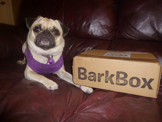 Our Barkbox Review May 2014: Emma's Barkbox