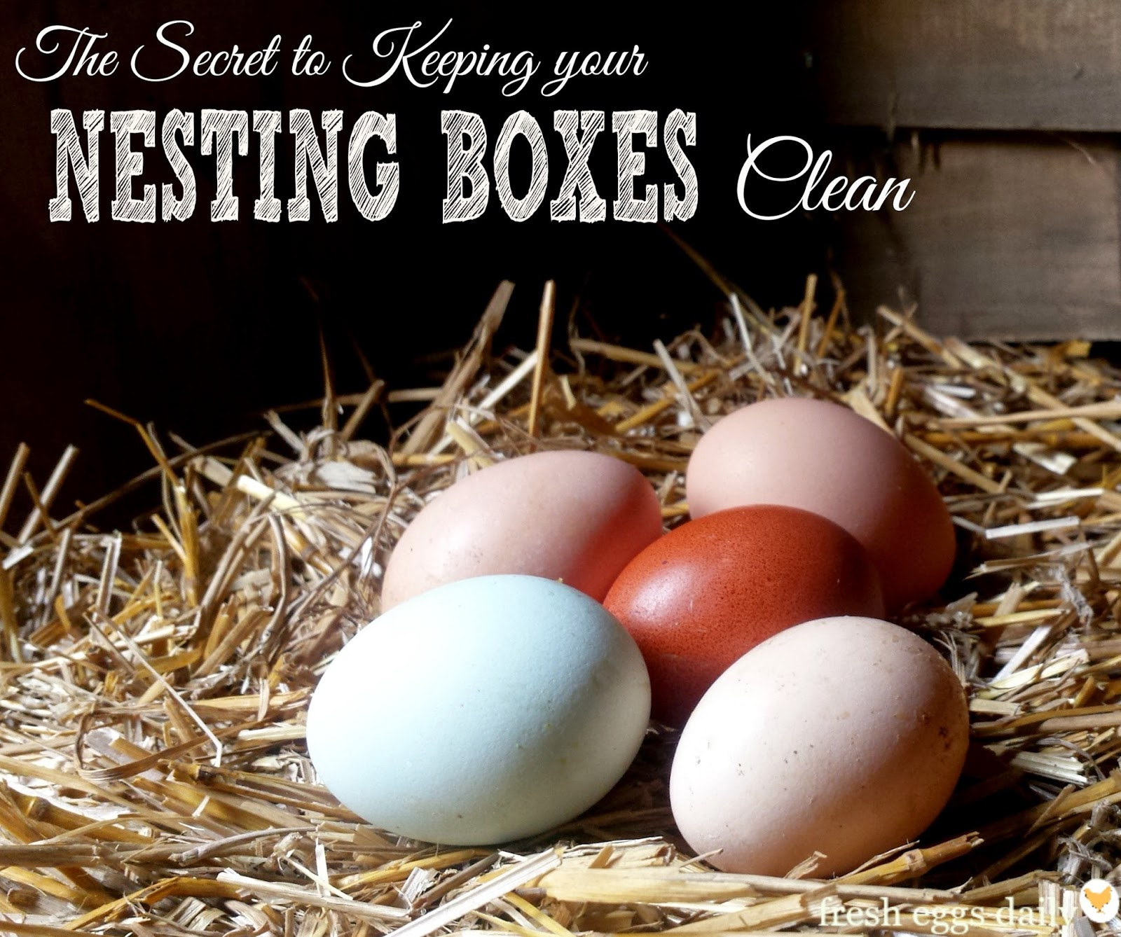march 2015 fresh eggs daily