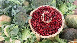 Makanan Sumber Vitamin E Untuk Ibu Hamil