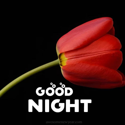 Good Night Photos HD