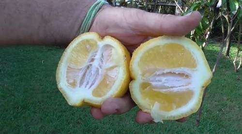 Kelebihan Vitamin C