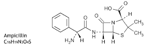 Ampisilin ialah obat Golongan Antibakteri Aminopenisilin Ampisilin