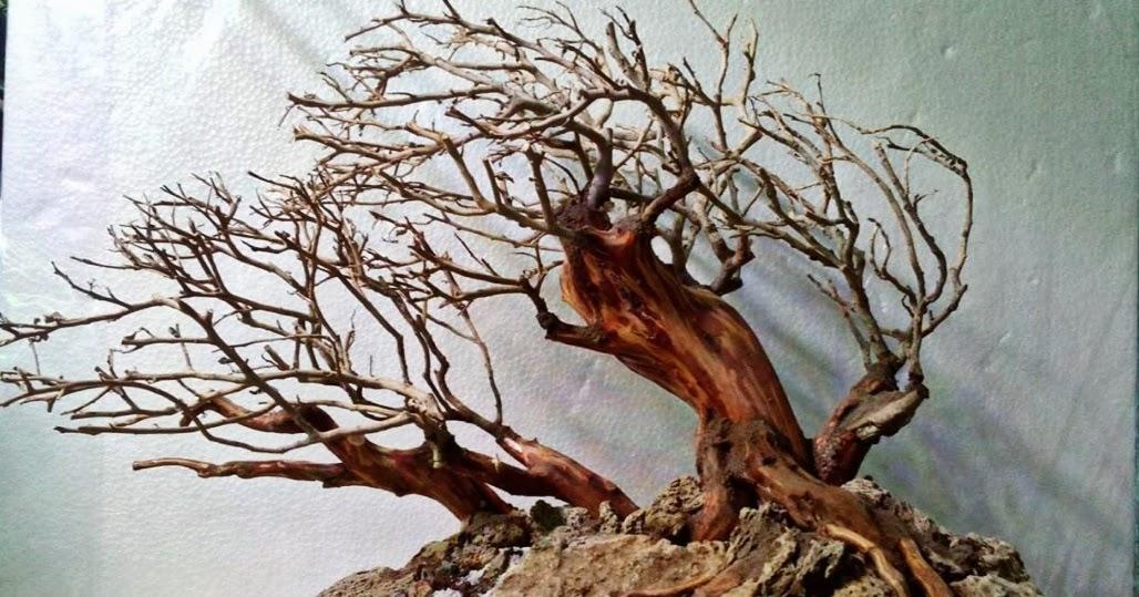 Jenis Akar Pohon Jambu Air - AKARKUA