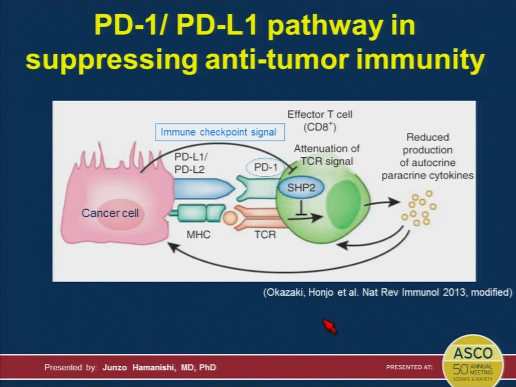 Anti-PD-1 immunotherapy doubles five-year survival in melanoma
