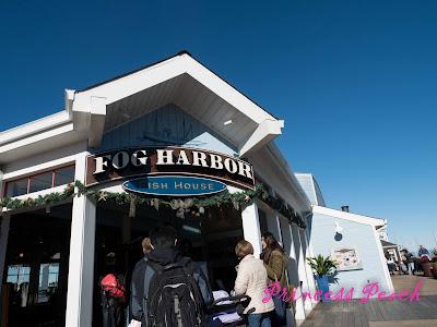美國: 海鳥海獅群聚的漁人碼頭 (Fisherman's Wharf, San Francisco, CA)