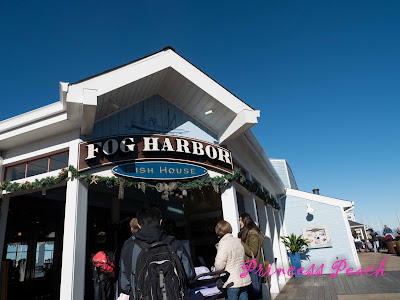 Fog-Harbor