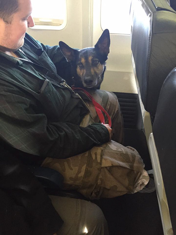 Airlines Break Their Own Rules So Pets Can Escape Fires - However, in these circumstances, airlines made an exception