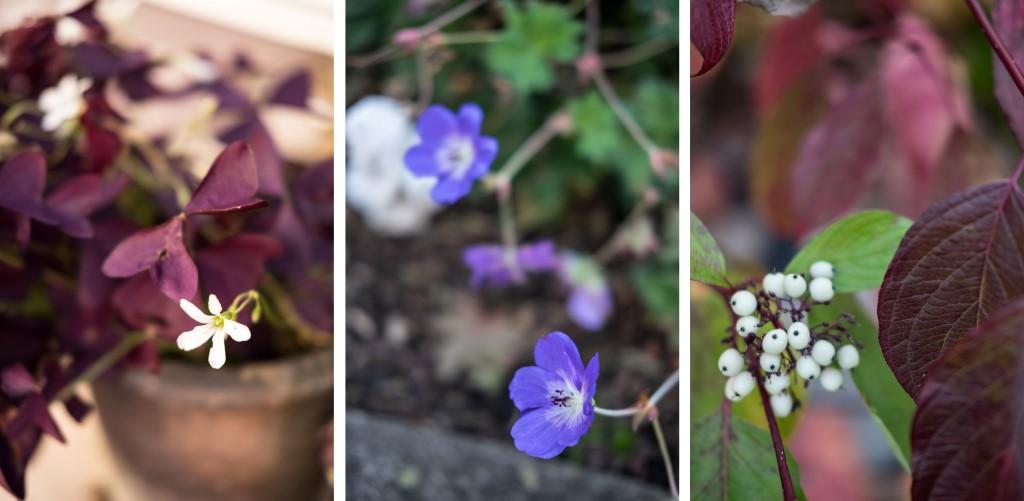 Herbstblütenpracht im Oktober-Garten by fim.works Lifestyle Blog