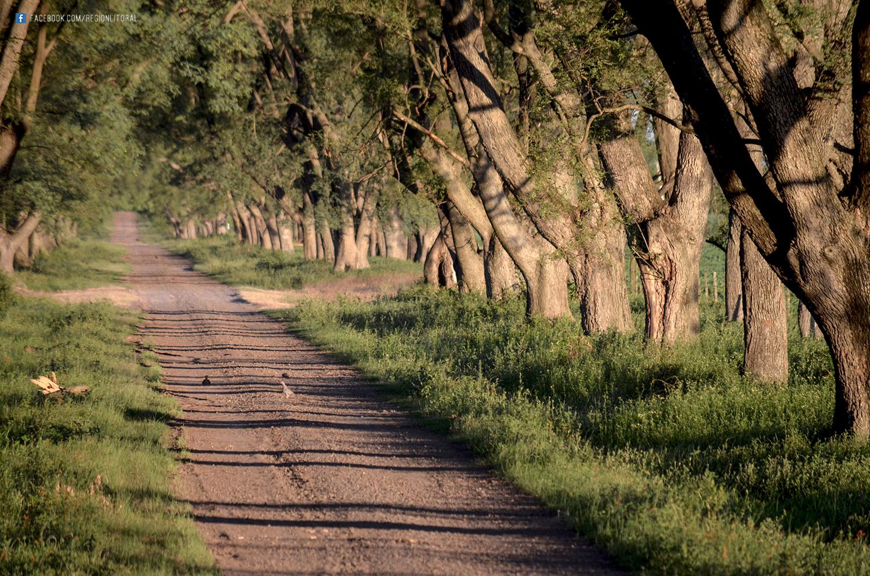 Camino Rural Matilde Santa Fe