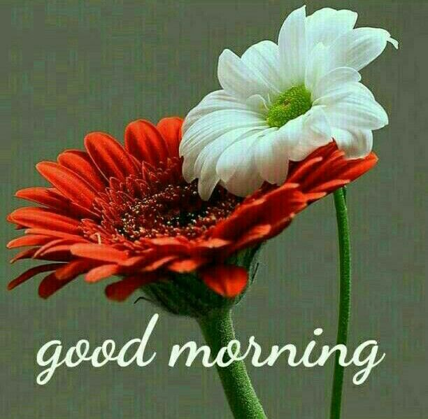 Good Morning Pictures For Whatsapp