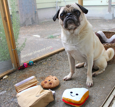 Liam the pug with his toys