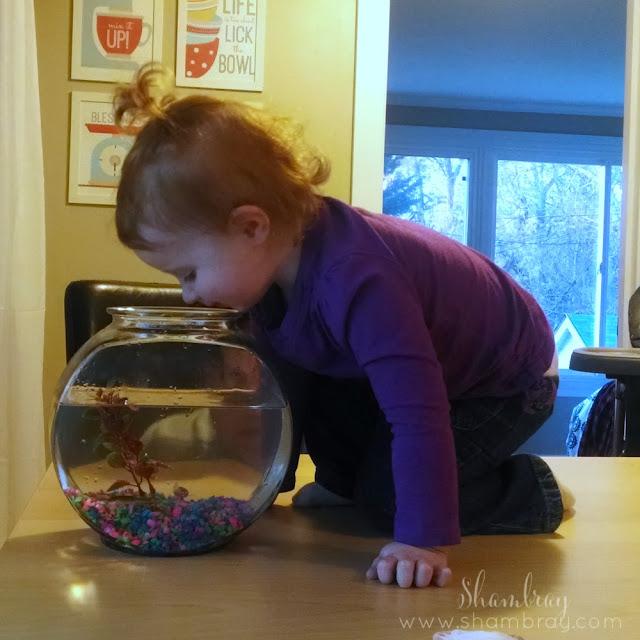 pet store, fish