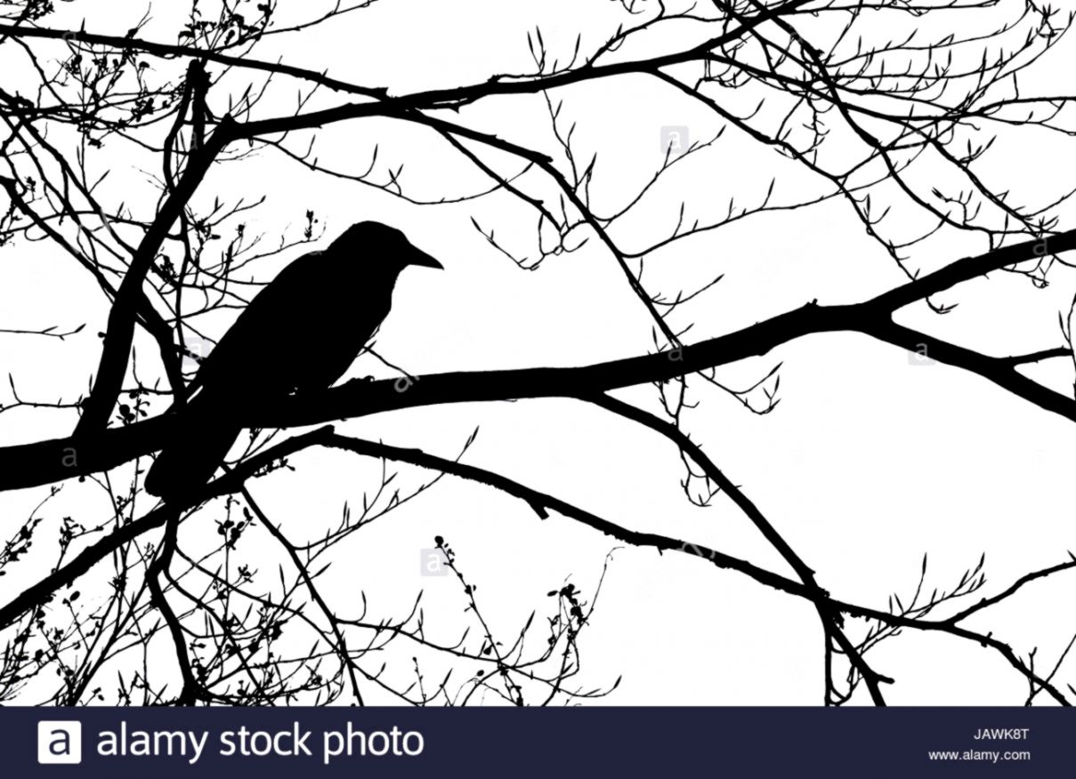 Crow On Branch Silhouette Opera Wallpapers