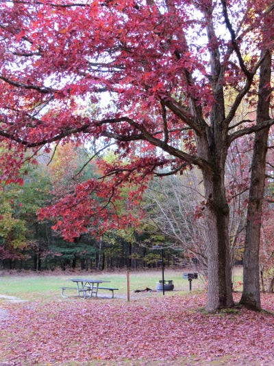 picnic area in fall