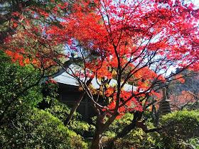 浄光明寺の紅葉