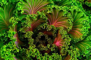 Zielone liście buraka