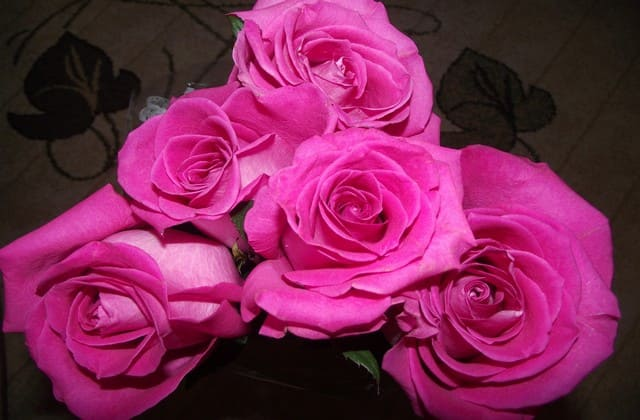 kumpulan mawar pink yang mekar indah