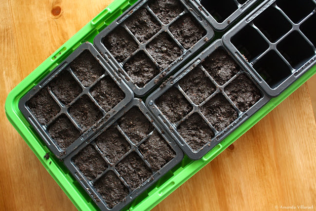 Seedlings tray - ready for seed planting