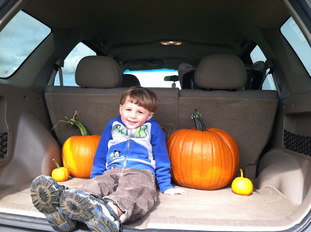 toddler and pumpkins