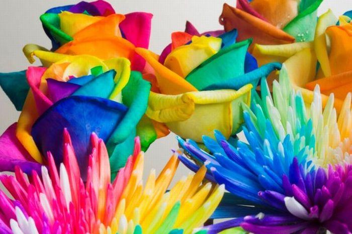 Flores de colores con colores del arco iris.