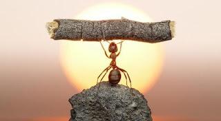 Η φιλοσοφία του μυρμηγκιού...