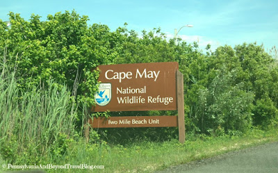 Cape May National Wildlife Refuge in New Jersey