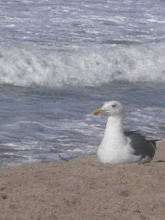 Photo of Sea Gull by Linda G. Hatton