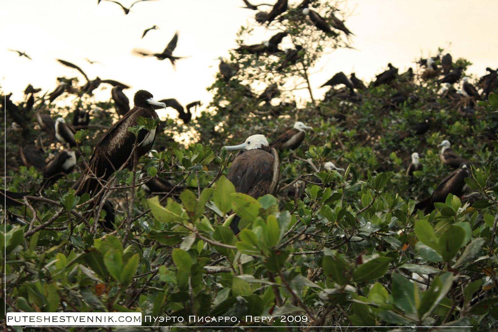 Птицы в мангровых зарослях