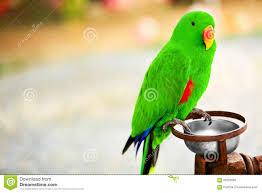 kvskidszone an essay about parrot an essay about parrot