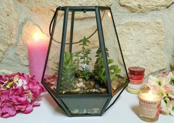 Tutoriel terrarium plantes grasses succulentes cactées