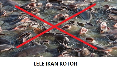 2 Alasan Lele Ikan Paling Kotor, Mengandung 3000 Sel Kanker