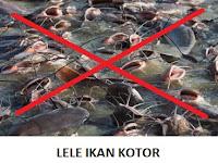 100 Bahaya Ikan Lele : Mengandung 3000 Sel Kanker