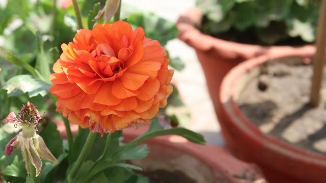 flower-wallpaper-for-mobile