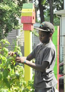 Boy tending a plant
