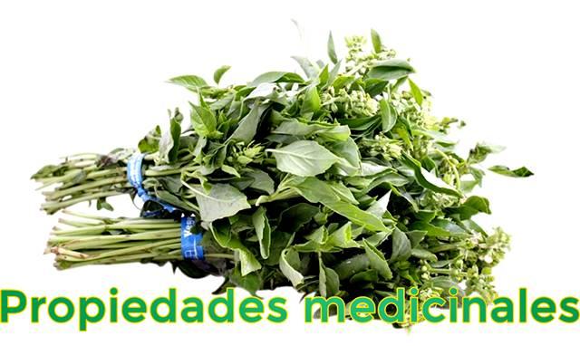 Propiedades medicinales gracias al consumo de albahaca