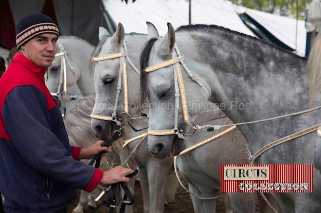 les chevaux du cirque prêt a entrer en piste