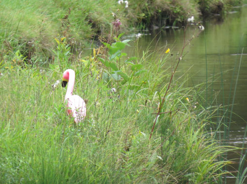 plastic flamingo in grass by river