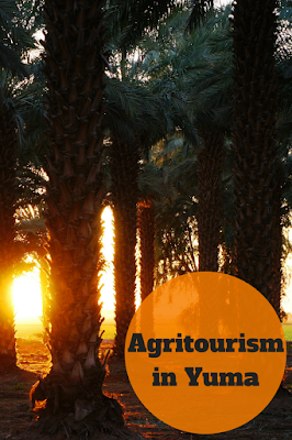 Travel the World: Agritourism is a budding industry in Yuma, Arizona where travelers can learn about Yuma's agriculture and where their food comes from, including the popular Medjool date.