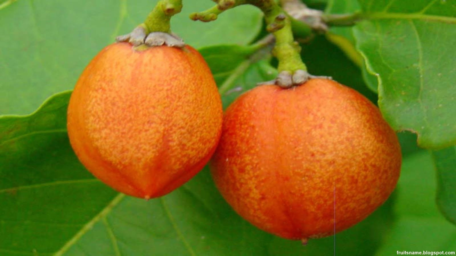 Peanut Fruit Images Wallpaper