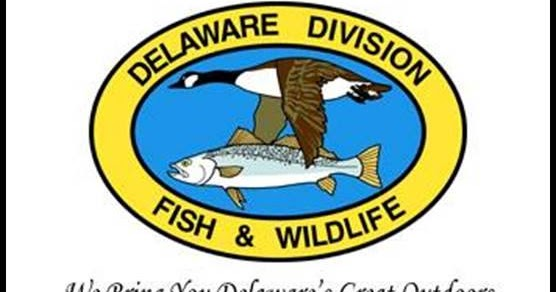 Delaware Way Fish And Wildlife Spring 2017 Downstate