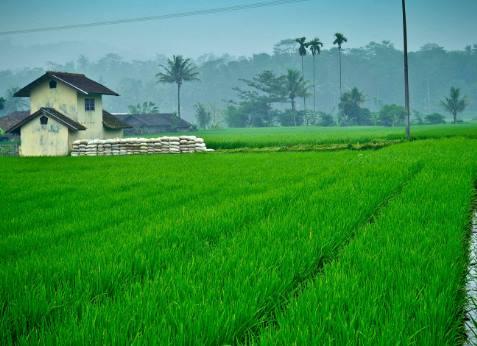Pertanian BKPM