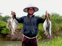 Bukti Testimoni Konsumen Umpan Indo Essen