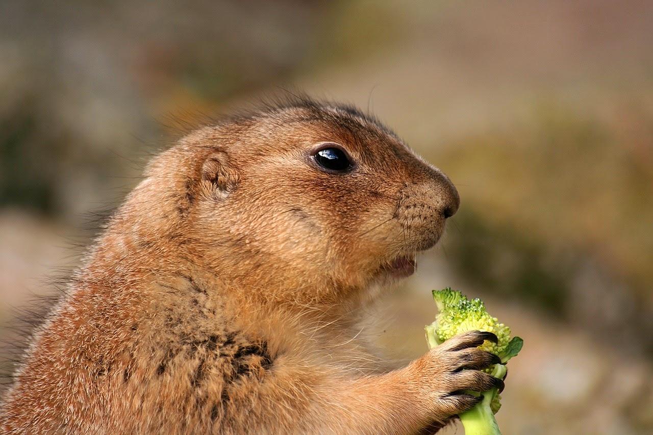 Comer brocoli