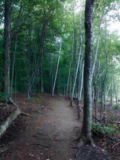 Sentier parc du mont Saint-Hilaire forêt